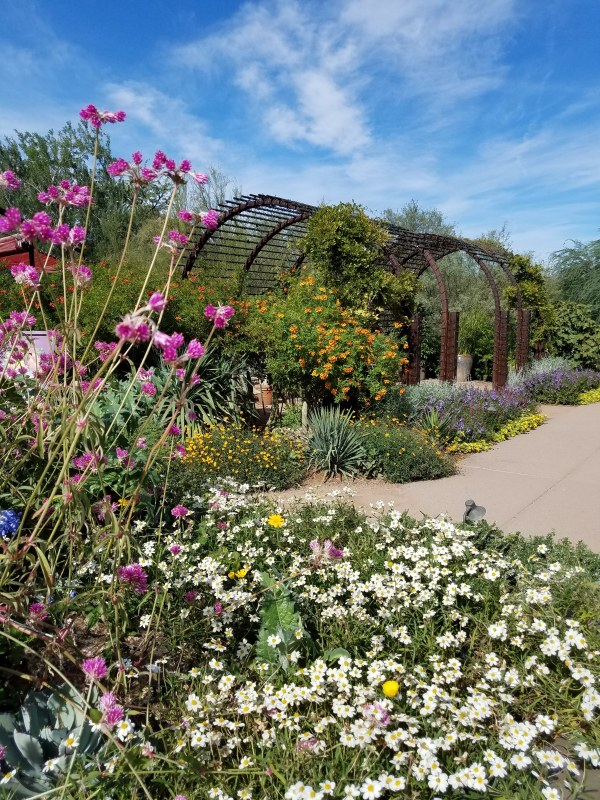 Desert Botanical Garden Flowers