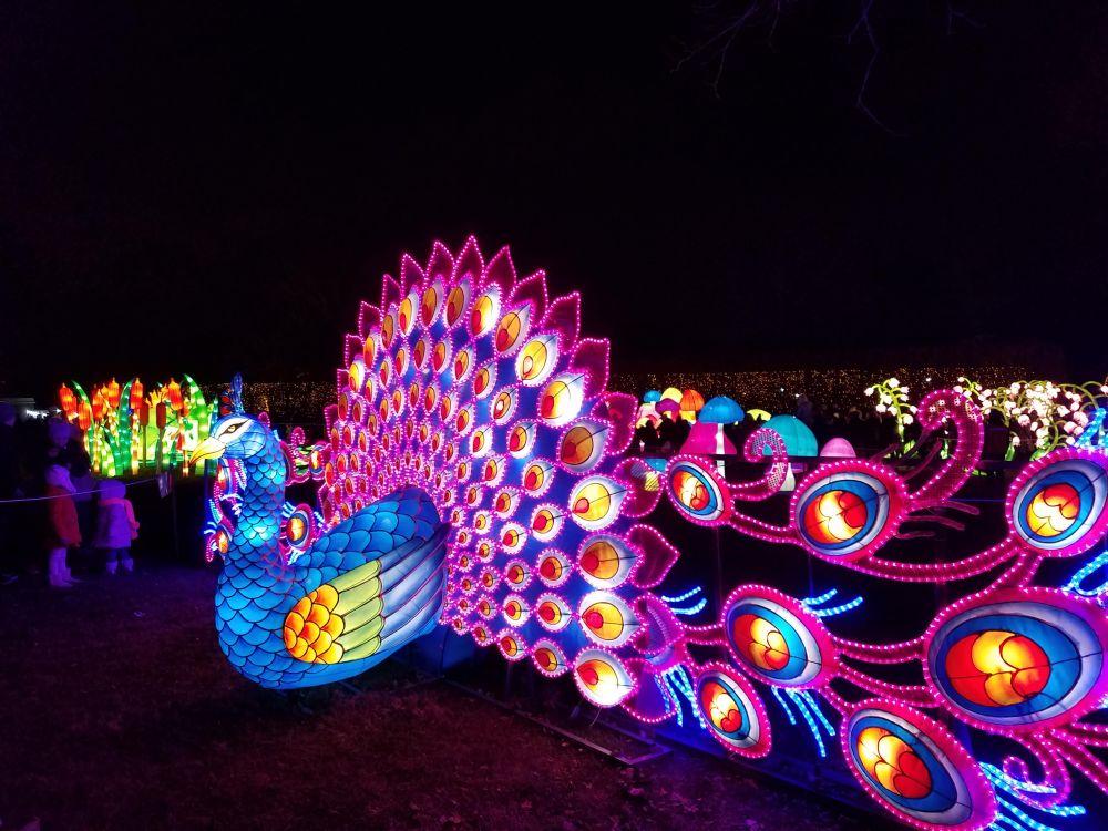 Lantern Festival Peacock Plumage