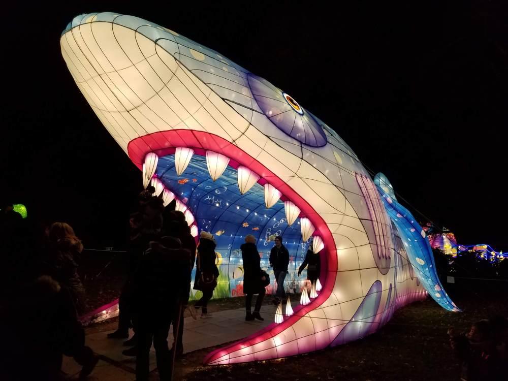 Lantern Festival Shark