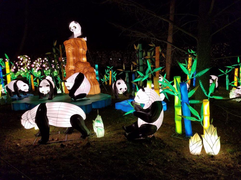 Lantern Festival Pandas