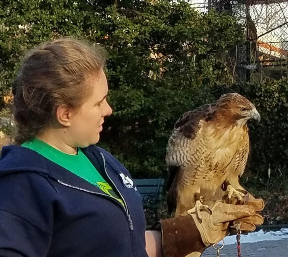 Hugo the Hawk