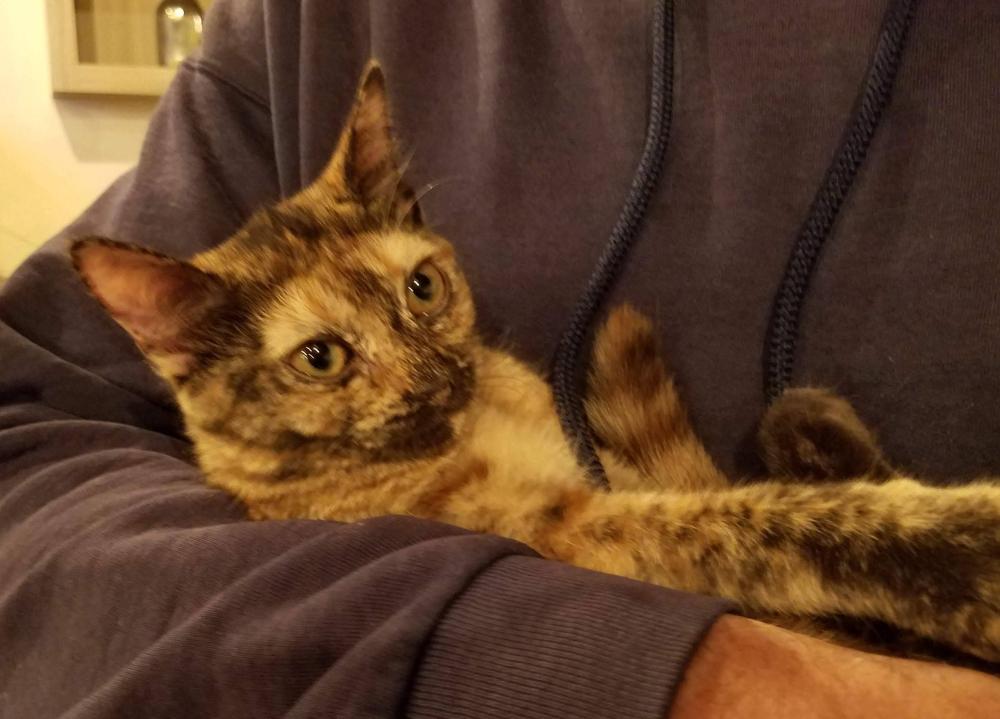 Brooklyn Cat Cafe Cute Kitten 2