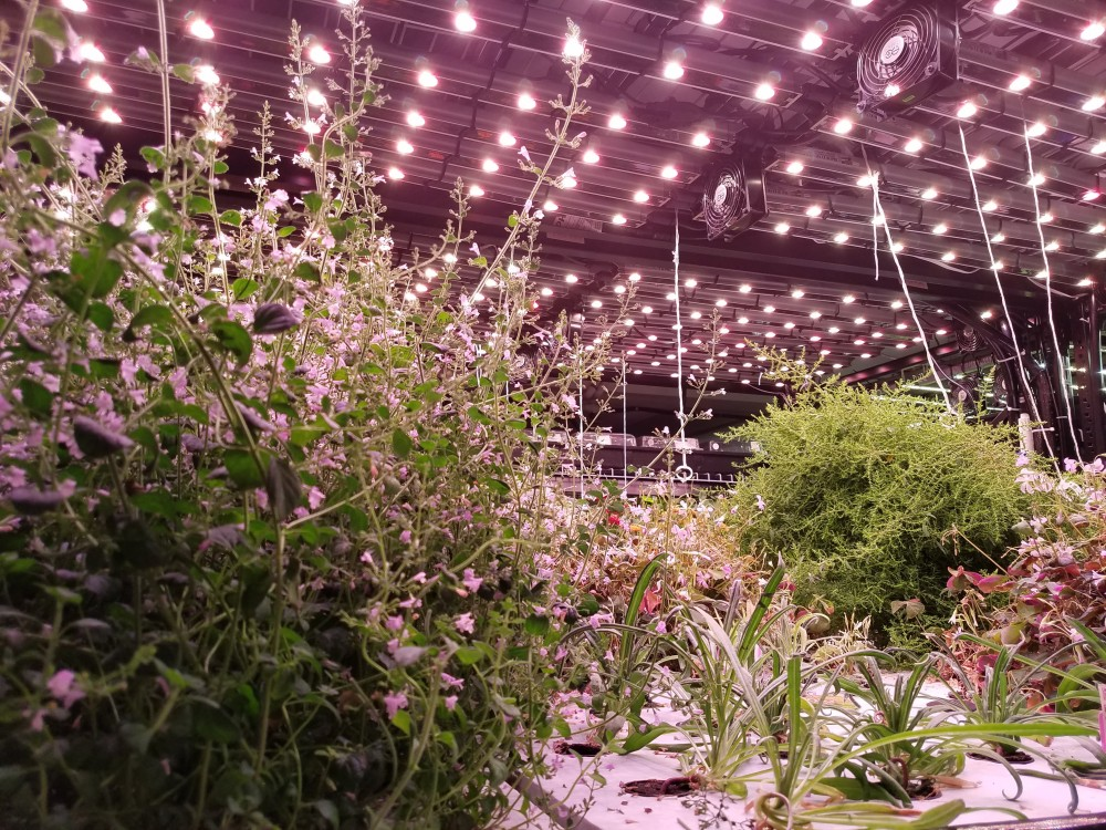 Farm.One Plant Variety