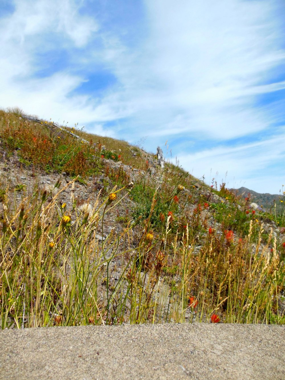 Mount St. Helens Wildflowers
