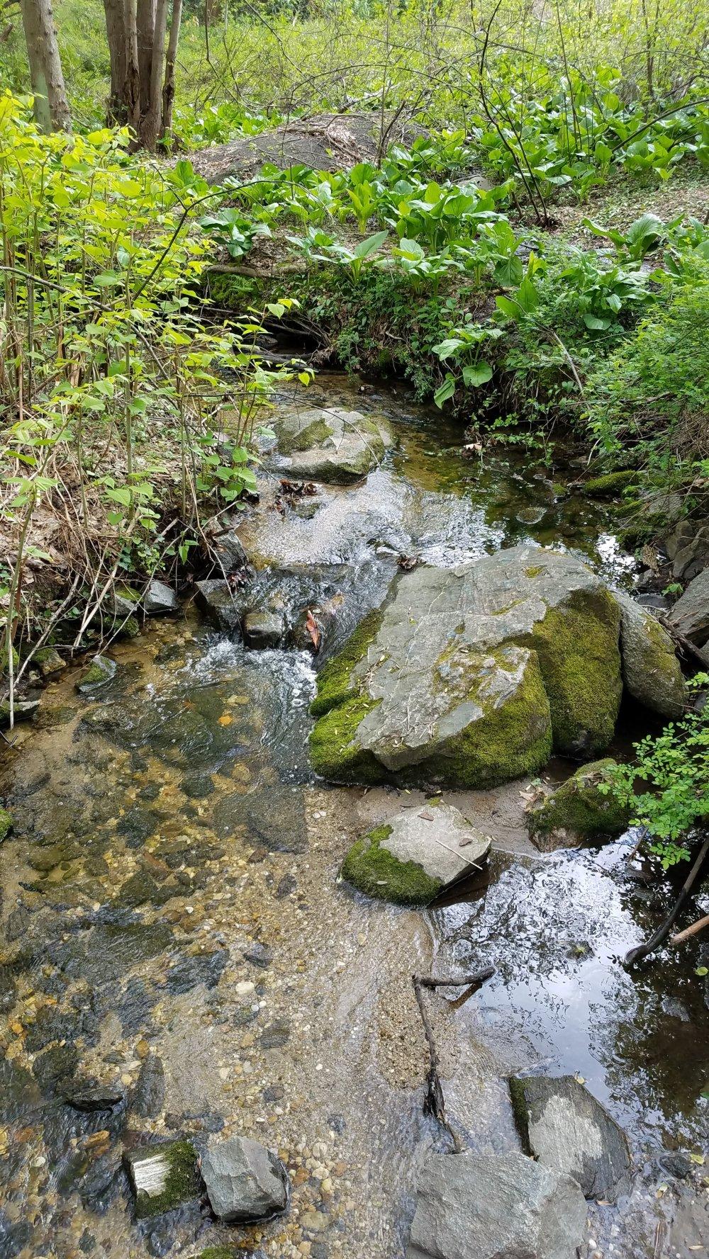 Welwyn Preserve Stream